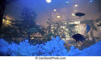 Aquarium Fish Tank Cora in Home.