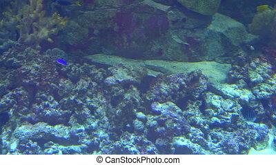 Aquarium, Fish Tank, Coral Reef, Animals, Nature - Aquarium,...