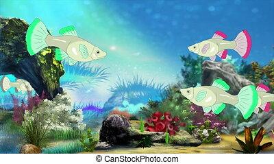 Aquarium Fish - Colorful Aquarium Fish swimming in fish...