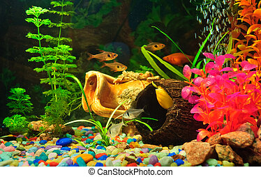 Aquarium fishes of different species.
