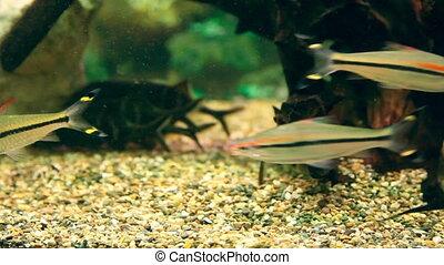 Aquarium - Fish in the fish tank.
