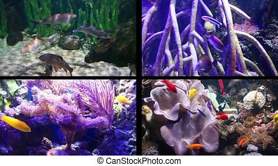 Aquarium - four compositions of aquarium fish