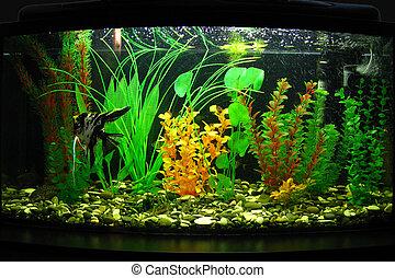 Fragment of aquarium full of water plants