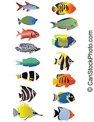 aquarium - Two line of tropical fishes, vector illustration