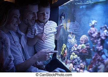 aquarium, jour famille