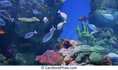 aquarium life in cartoon form at jeddah city in saudi arabia...