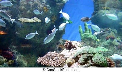 aquarium life with colorful fish