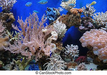 marine fishes in beautifull salt water aquarium