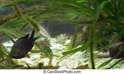 aquarium of genoa, tropical fishes