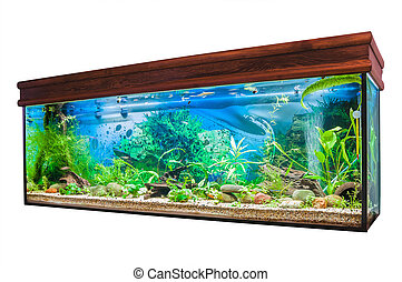 Aquarium on white background