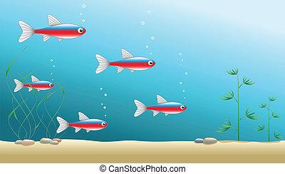 Aquarium or ocean background - A shoal of cardinal tetras in...