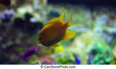 Aquarium or Oceanarium, Fish Tank, Coral Reef, Animals. -...