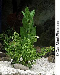Aquarium plant - Plant decorations in a freshwater aquarium