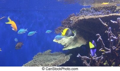 Aquarium - Some tropical fish are swimming in an aquarium....