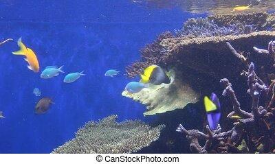 Aquarium - Some tropical fish are swimming in an aquarium....