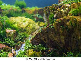 aquarium tank with a variety of aquatic plants.