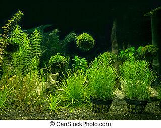 Aquarium tank with a variety of aquatic plants