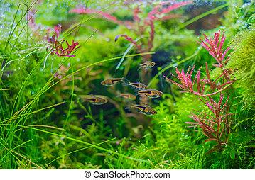 aquarium tank with aquatic plants .