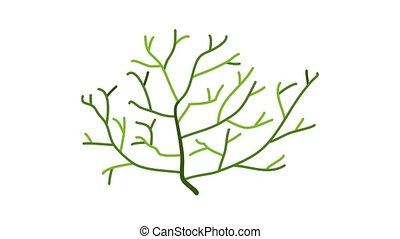 Aquarium thin plant icon animation cartoon object on white background