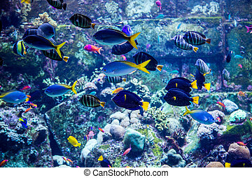 Aquarium tropical fish on a coral reef - Photo of a tropical...