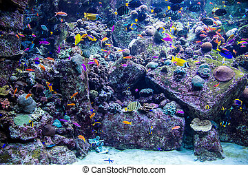 Aquarium tropical fish on a coral reef