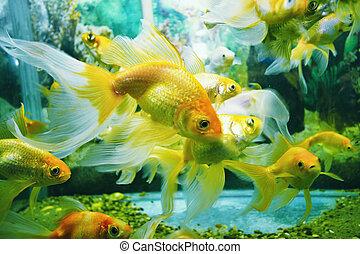 Aquarium - underwater image of reef and colorful fishes