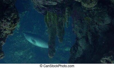 aquarium, van, genua, zegels, zwemmen, u