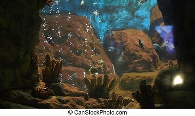 Aquarium with bubbles and fishes