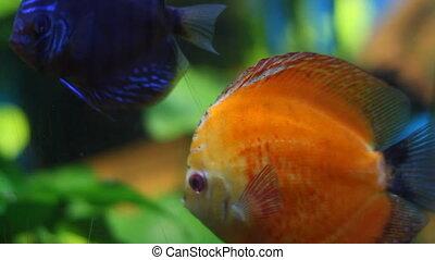 Aquarium with exotic fish