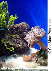 aquarium with fish and corals - aquarium with colorful...