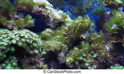 aquarium with fish and corral