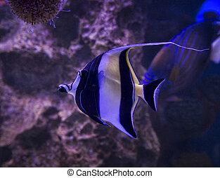aquarium with fish in the water