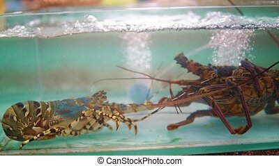 aquarium with lobsters in the food market. Asian restaurant with seafood.