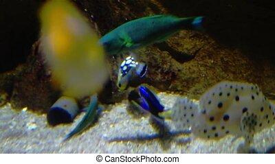 Aquarium With Small Fish