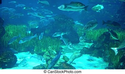 Aquarium with various kinds of fish swimming in the main...