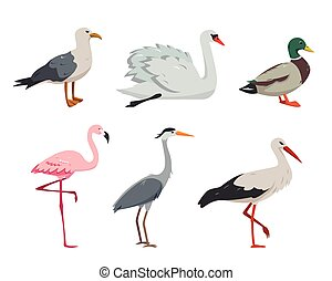 Aquatic and waterfowl Birds in different poses.