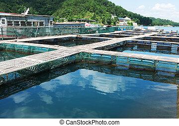 Aquatic farm on the lake under sunshine