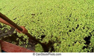 Aquatic Plants, Amazon - Shipping On Amazon River