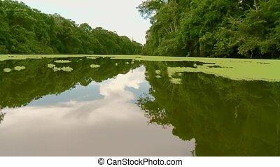 Aquatic Plants, Amazon