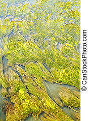 aquatic vegetation abstraction