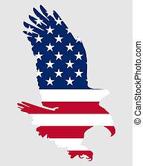 aquila, americano, audace