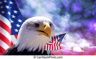 aquila, americano, calvo, flag.