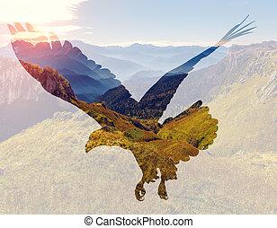 aquila, calvo, fondo., paesaggio, montagna