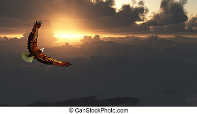 aquila, drammatico, volo, sopra, cloudscape