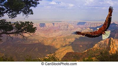 aquila, volo, volerci, stati uniti, sopra, canyon, grande