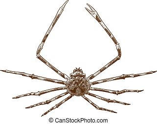 araña, grabado, japonés, ilustración, cangrejo