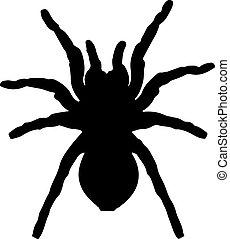 araña, silueta, vector, negro