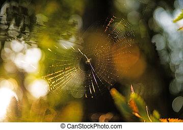 araña, telarañas, contrailuminación