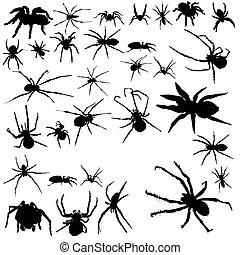arañas, conjunto, blanco, plano de fondo