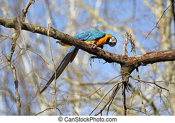 Details of ara ararauna perched on a branch